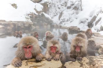 snow monkey of the outdoor bath